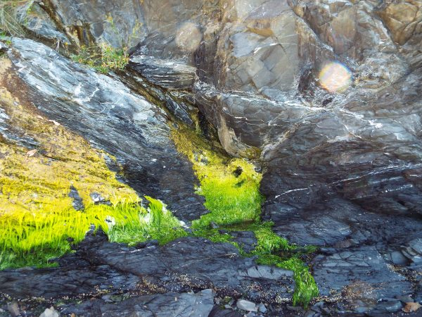 Neon ombre moss, so cool.