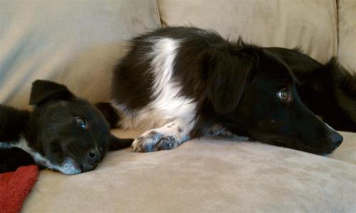 Couch QT between pups